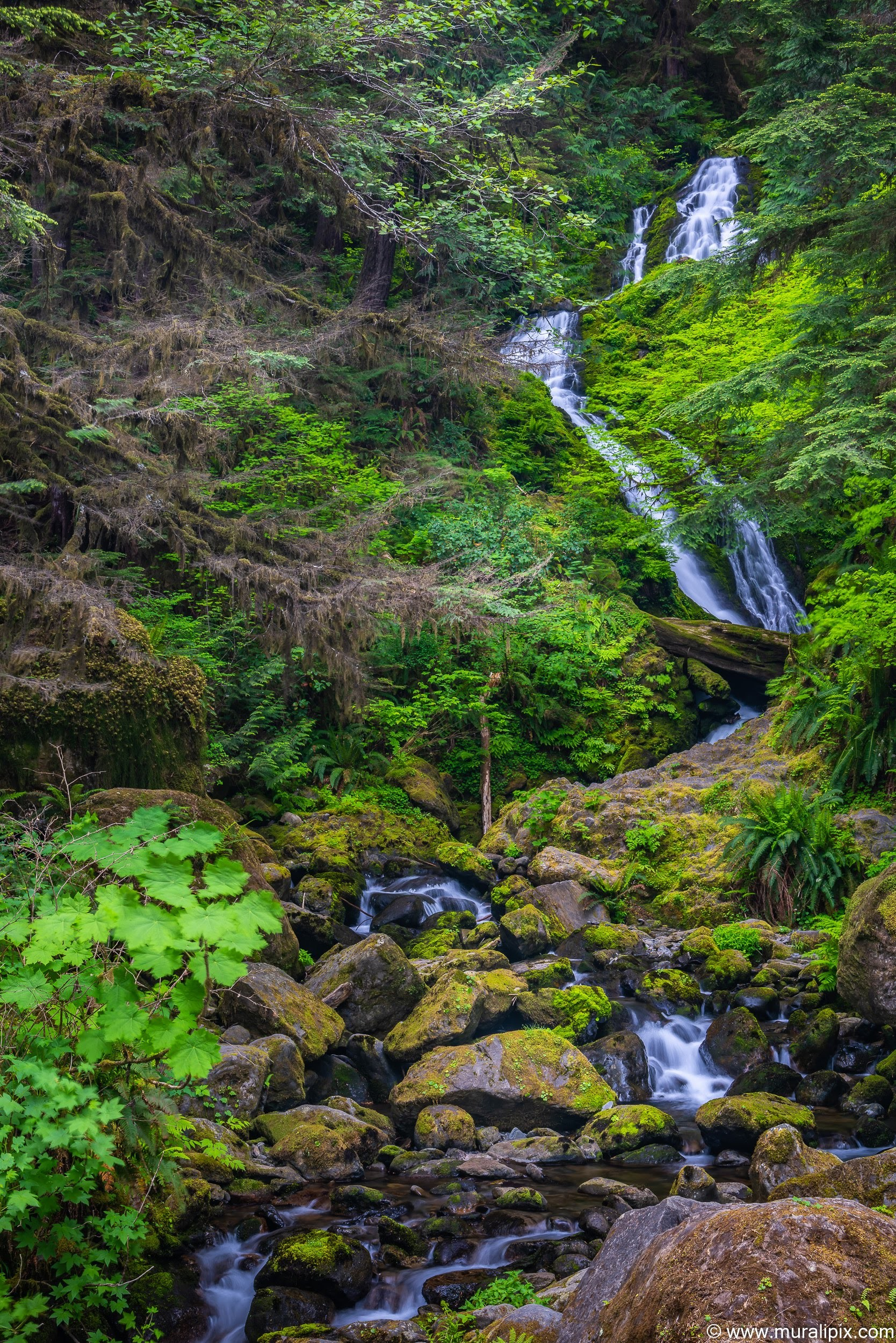 bunch-creek-falls-2-2019