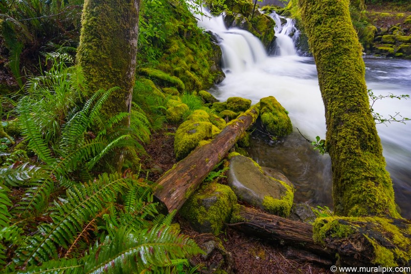 falls-creek-40-quinault