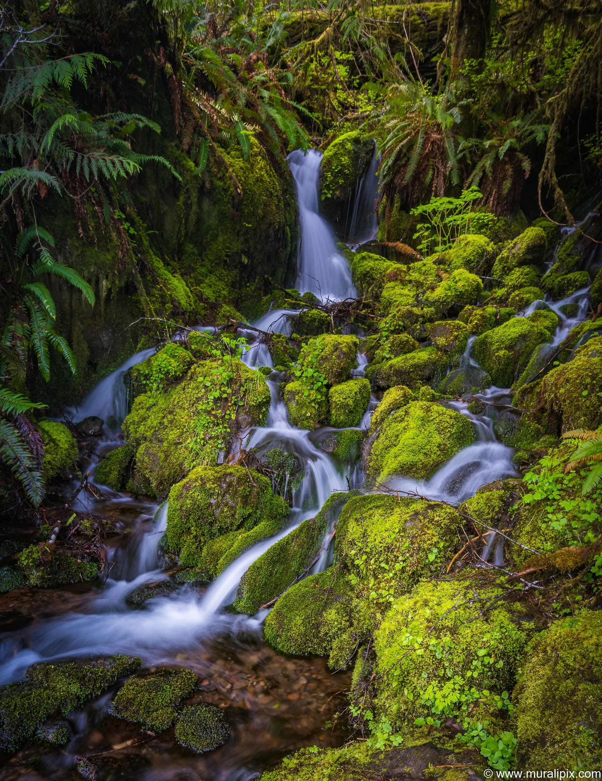 quinault-rainforest-stream-2