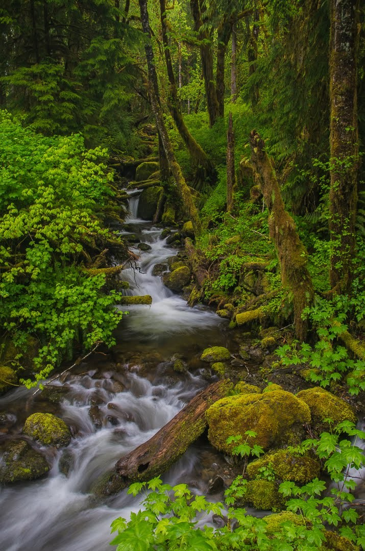 quinault-rainforest-stream