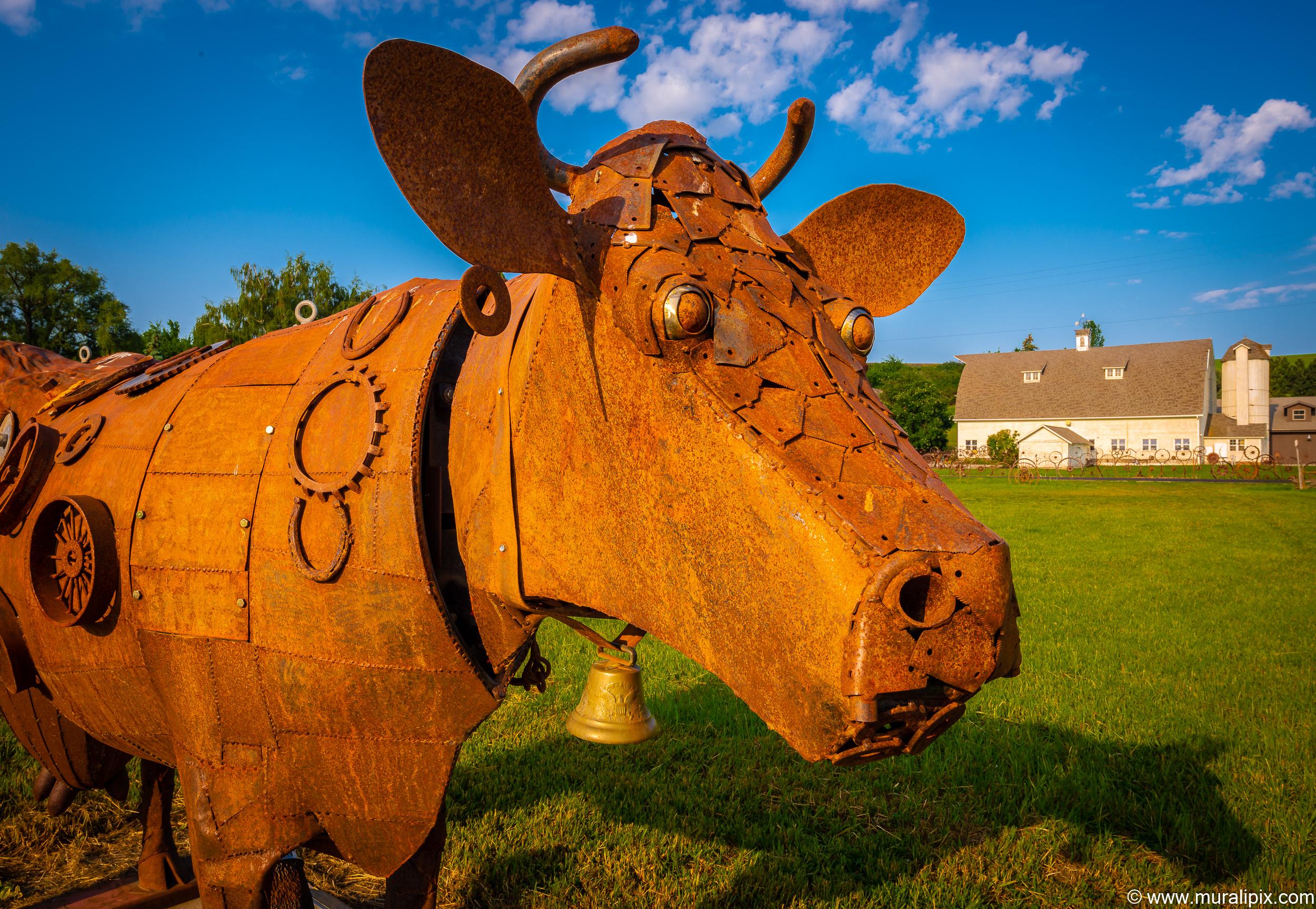 Dahmen Barn Bull